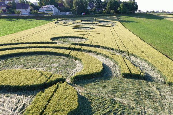 """Le """"crop circle"""" a été réalisé en un peu plus de trois heures par des élèves de sixième du collège Jean Sturm à Strasbourg."""