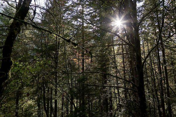 La parcelle de 10 hectares de forêt se situe sur les hauteurs de Thônes, en Haute-Savoie.