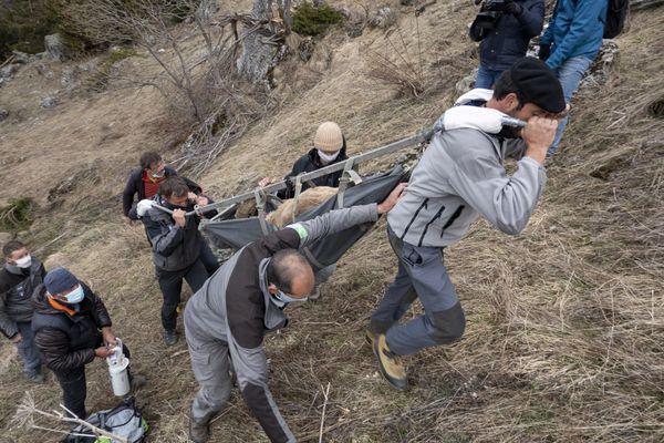 Les captures ont été réalisées par télé-anesthésie, filet tombant ou cage piège.