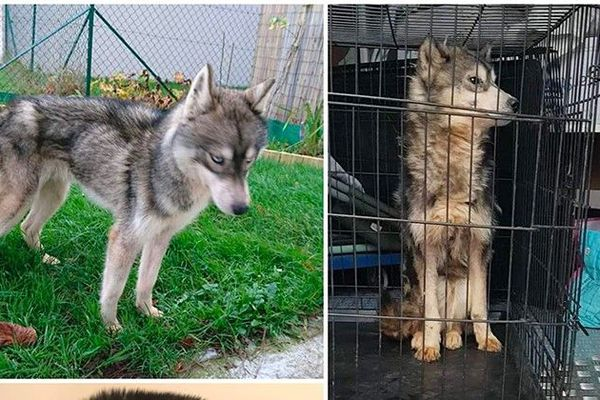 6 chiens ont été donnés par l'élevage à l'association Les Brigitte de l'espoir qui a donné l'alerte