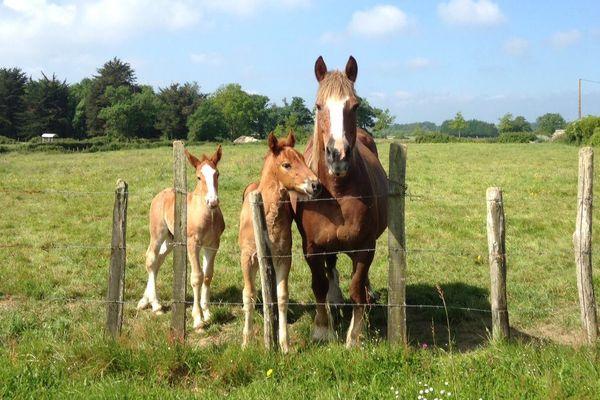 Les chevaux au soleil.