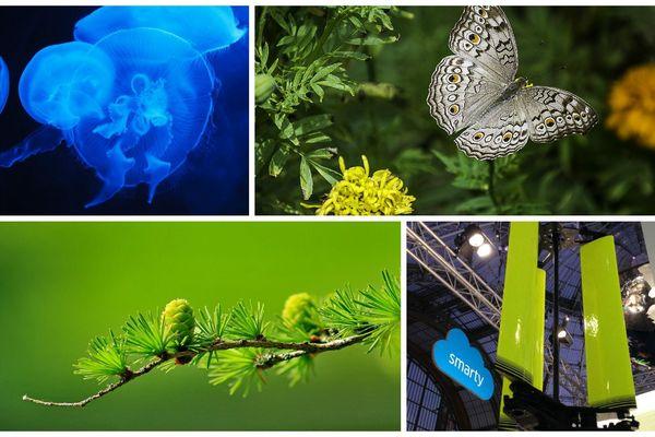 Le biomimétisme : la nature va-t-elle inspirer la prochaine révolution économique ?