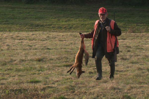 La fédération des chasseurs creusois souhaiteraient étendre les dérogations aux renards et aux palombes pendant le confinement