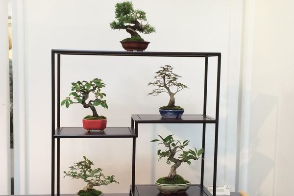 La présentation du bonsaï représente également tout un art avec des règles précises à respecter.