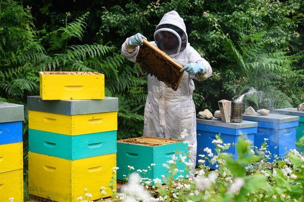 Après la fermeture de la plupart des marchés sur le territoire français, des apiculteurs craignent une baisse de leur chiffre d'affaires.