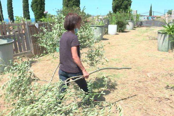 Même l'olivier sacré pour Anissa Cheurfa a succombé aux coups de lames des vandales. Marseille (15e)