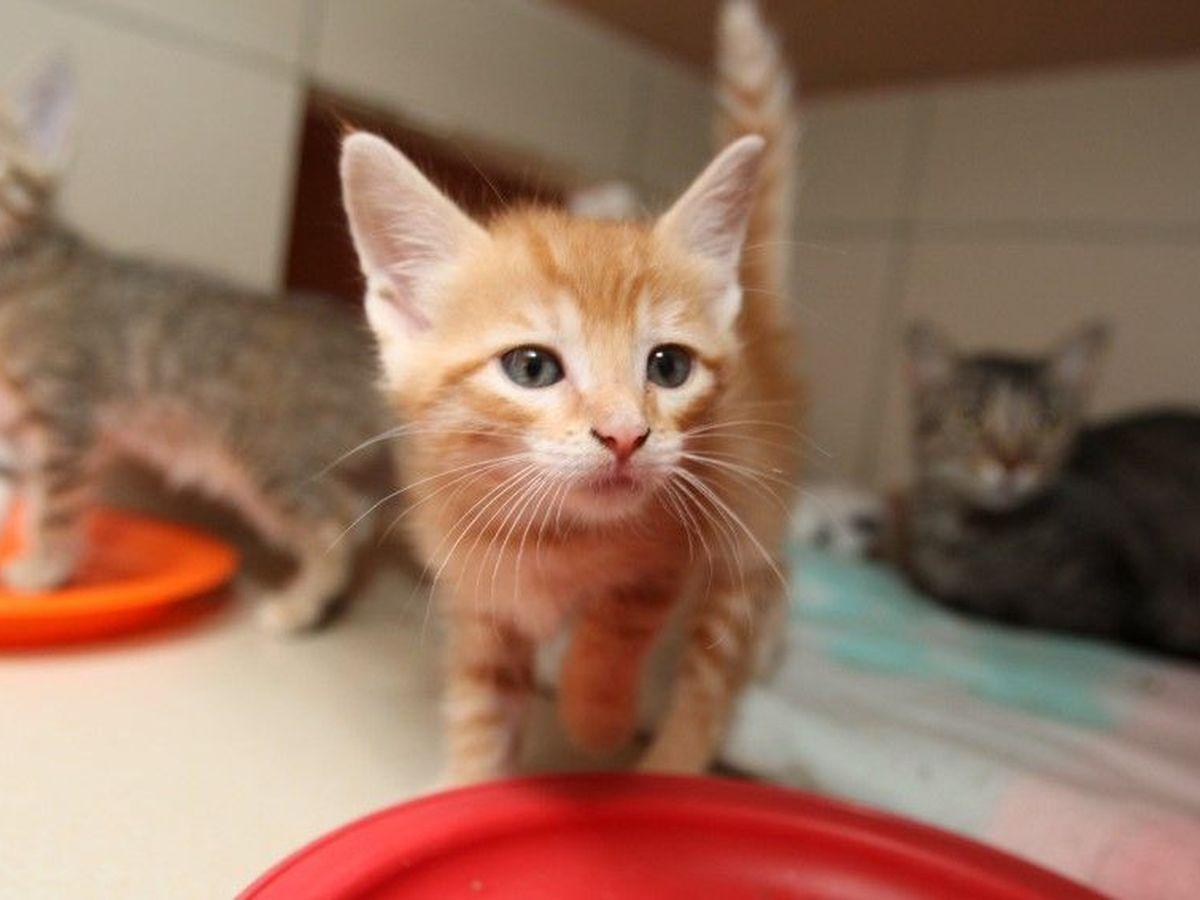Un Programme D Adoption Solidaire Pour Les Animaux En Refuge Pendant Le Confinement