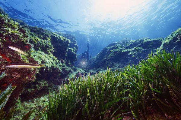 Sur les 648 hectares d'herbiers de posidonie que renferme la baie de Santa Manza, à Bonifacio, 11 ont été détruits sur l'année 2019-2020.