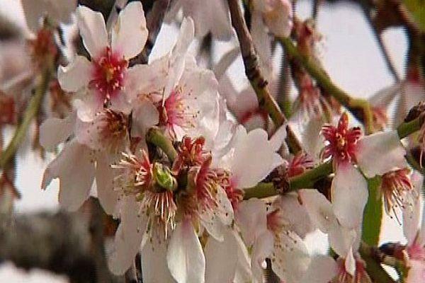 Hiver très doux, les arbres sont déjà fleuris en plein mois de février