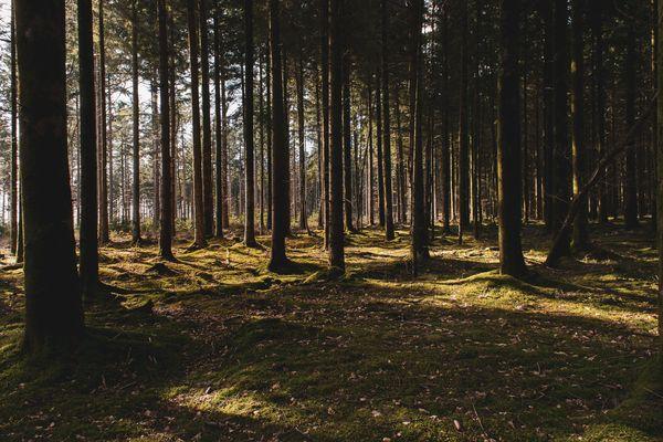 Une forêt d'automne.