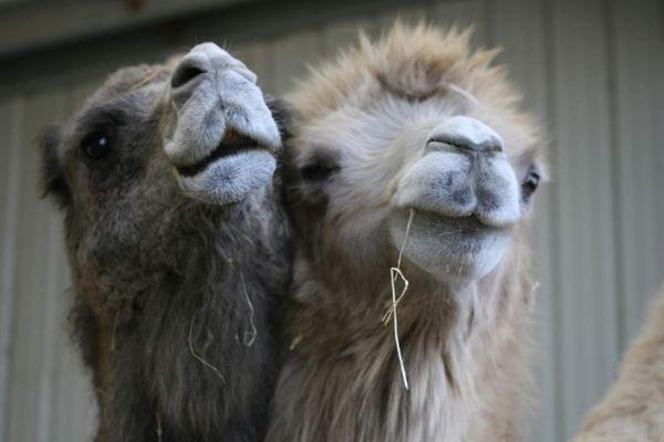 Les animaux du zoo refuge de la Tanière, en Eure-et-Loir, gardent le moral