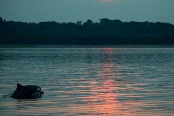 Malgré tous les efforts pour le secourir, le dauphin est mort au large de la plage de Beauduc (photo d'illustration)