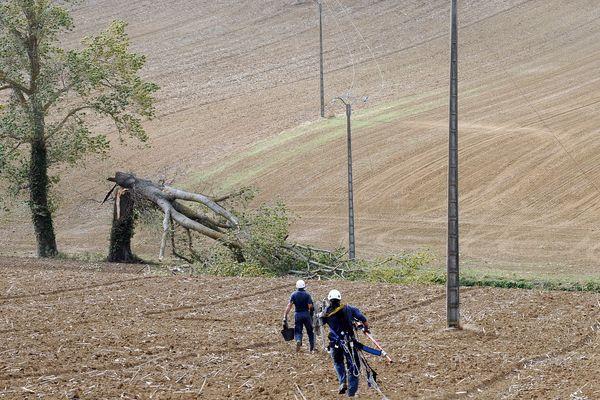 Des agents interviennent sur des lignes électriques après une chute d'arbre - Photo d'illustration
