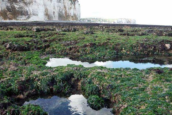 Littoral de  Seine-Maritime :  rochers près de Veulettes sur mer