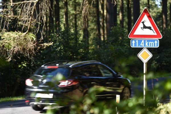 Depuis le 1er janvier dernier, plus de 12 000 collisions entre voitures et animaux sauvages ont été enregistrés.