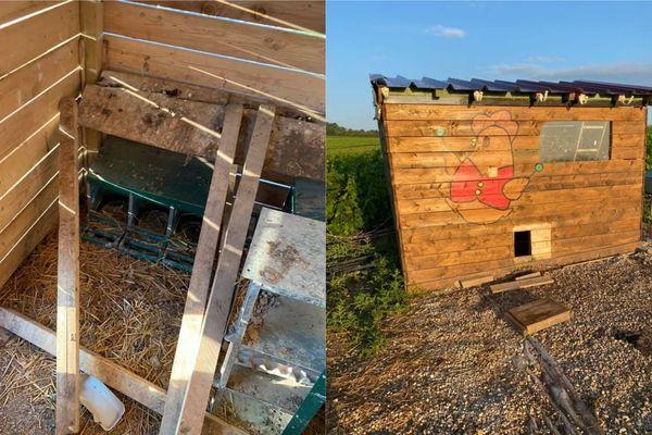 Le poulailler expérimental de Florian Gondé a été vandalisé et vidé, à Taissy dans la Marne.
