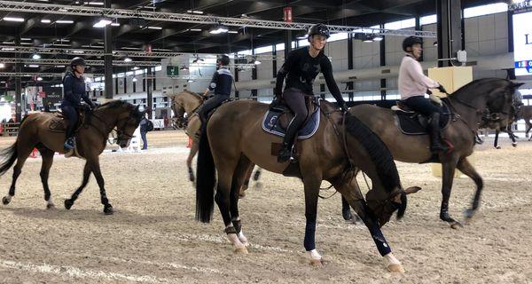 90 pour cents des chevaux de compétitions naissent par insémination artificielle
