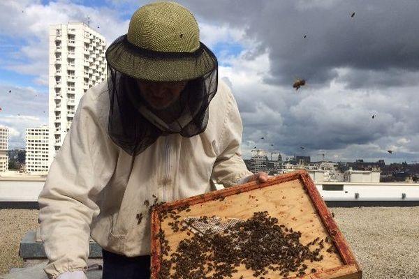 la récolte de miel sur le toit de la Poste du Colombier à Rennes