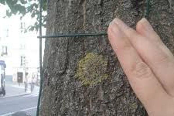 Voici comment faire le relevé des lichens près de chez vous
