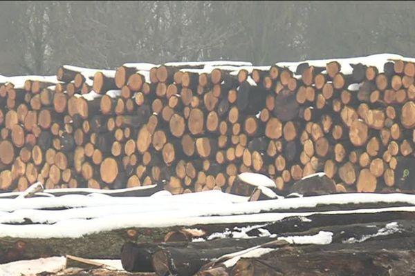 Chênes sous la neige en attente de découpe