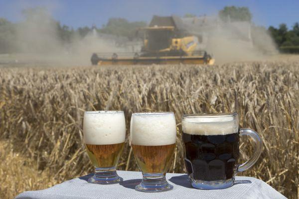 La France est le 1er exportateur mondial de malt. 15 % des bières brassées dans le monde le sont à partir d'orges de brasserie et de malts français.