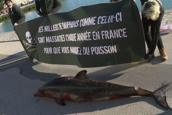 Dauphin mort exposé par l'ONG Sea Shepherd, sur le port La Rochelle.