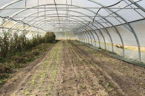 Les serres de Guillaume Burnel où sont semées les carottes et les salades pour l'hiver prochain