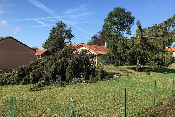 Des arbres coupés en deux par l'orage dans la commune de Mézériat (Ain)