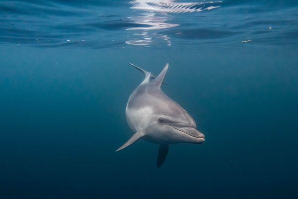Le dauphin n'a pas peur de l'objectif du photographe.
