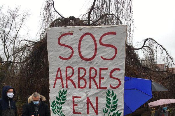 Les collectifs espèrent sauver d'autres arbres, et réclament la plantation de nouveaux