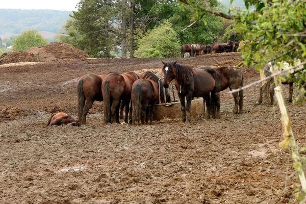 Selon les associations, les chevaux étaient nourris exclusivement à la paille et à la luzerne déshydratée.