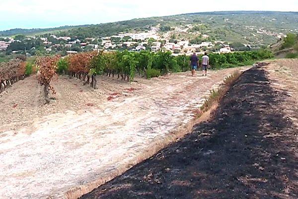 900 hectares de végétation ont brûlé, dont des vignes, durant le violent incendie qui s'est déclaré à Montirat dans l'Aude.