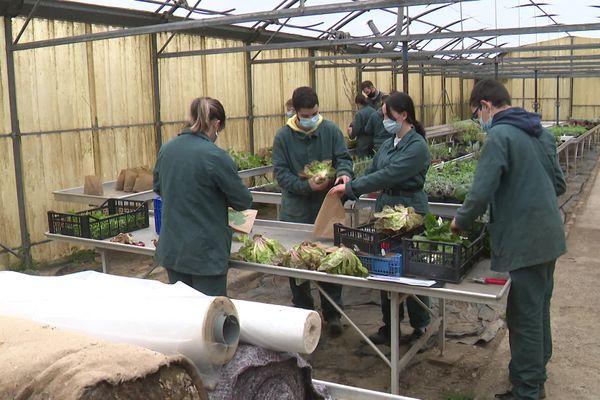 Les élèves de première section horticole préparent les paniers qui seront vendus sur le marché interne au Lycée Charlemagne.