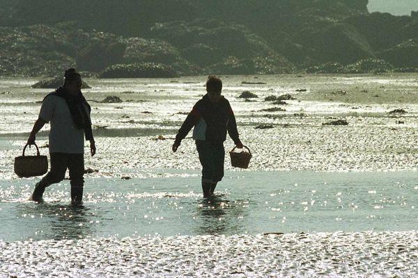 Pêche à pied dans l'Aber Wrac'h