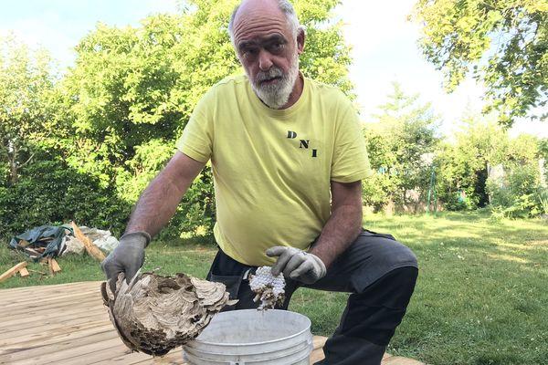 Un nid ne sert qu'une seule saison à l'essaim de frelons asiatiques.