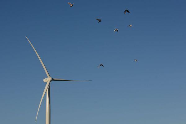 Plusieurs dizaines d'oiseaux et de chauves-souris protégés sont victimes des éoliennes