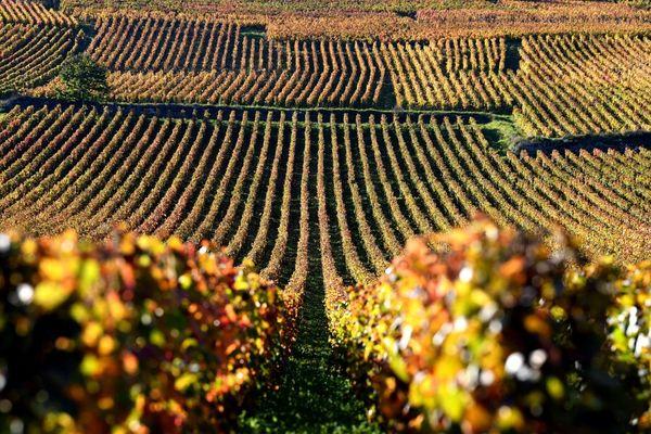 Le célèbre domaine de la Romanée Conti, en Côte-d'Or, au mois d'octobre