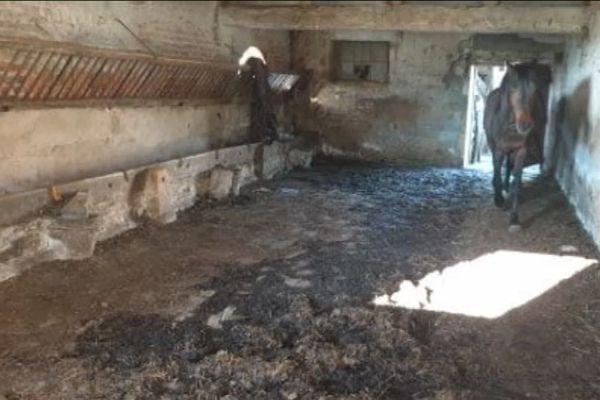 En 2019, les services de l'Etat étaient déjà intervenus aux Haras de la Baulme pour saisir une centaine de chevaux.