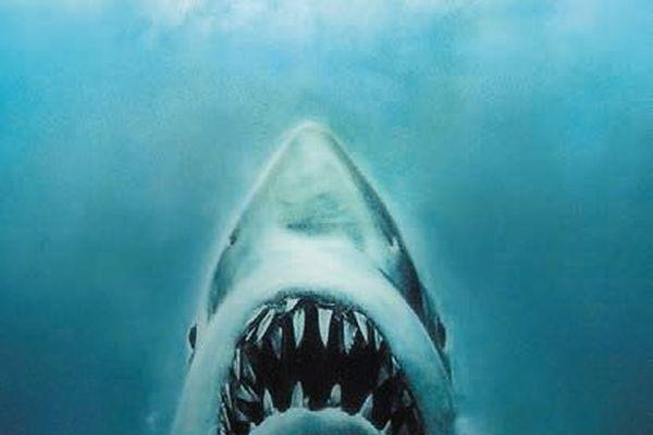 """Bar des Sciences """"Attention Requins !"""""""