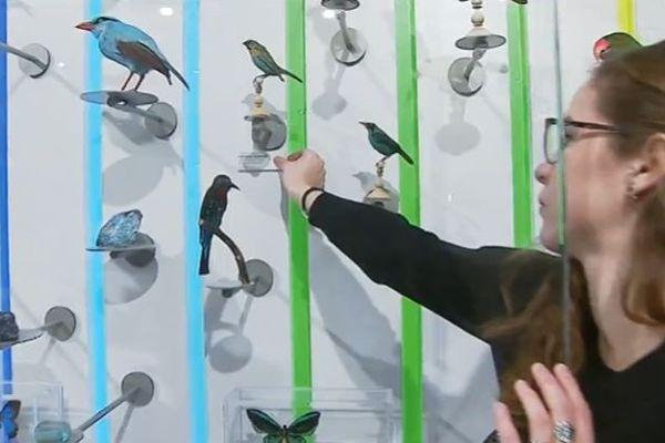 L'heure est à l'étiquetage des 3500 spécimens exposés dans le tout nouveau Museum de Bordeaux