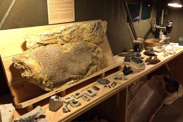 """L'exposition """"Dinosaures, les géants du vignoble"""" est à voir jusqu'au 31 décembre 2017 au musée d'Angoulême."""