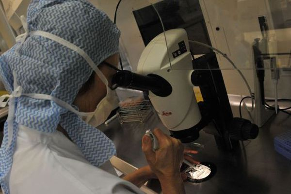 Au service de biologie et de reproduction de la Conception, on pratique en moyenne 1500 actes par an en PMA