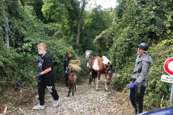 Lors du sauvetage et de la récupération des deux chevaux et d'une chèvre.