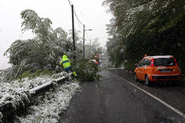 Des arbres sont tombés sur les routes suite à l'épisode neigeux.