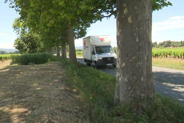Ces platanes, alignés le long de la départementale 610 entre Puichéric et la Redorte ont plus de 70 ans - 7 juillet 2021.