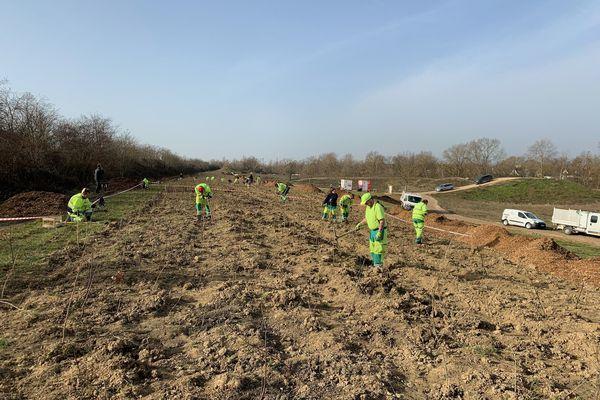 La future forêt en bordure de l'A36 à Mulhouse sera composée de 24 000 arbres, arbustes et buissons.