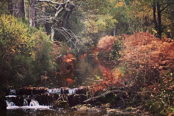 Ruisseau d'automne à Lacanau - Gironde (33)