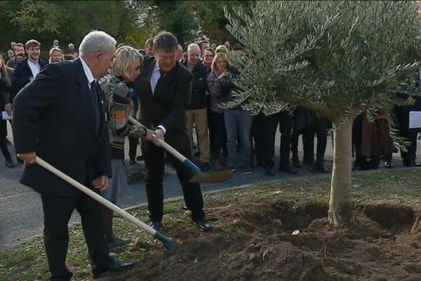 Guerre 14/18 : des rencontres franco-allemandes ce 11 novembre à Givors. Les maires de Givors et de Döbeln ont planté un olivier ce dimanche 11 novembre, centenaire de l'armistice.