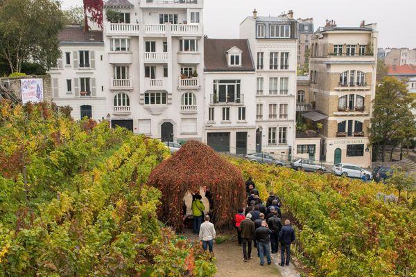 Les vignes du Clos Montmartre, à Paris.