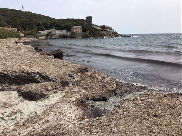 La plage a disparu sous les posidonies